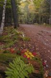 Carriage Road Acadia '06