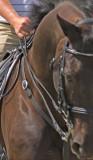 zP1050504 dominance - obedience - dressage.jpg