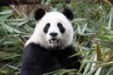 Chengdu 2009