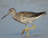 1190_sandpipers