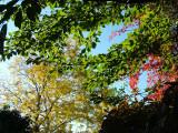 Beautiful colourful leaves