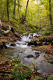 Cabot Trail Stream
