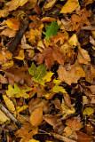 Forest Floor Litter