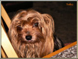 Tedley Likes Cranberry Orange Walnut Bread