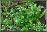 Herb Garden Fall Oregon