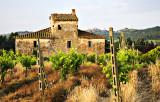 Tuscany Vinyard