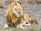 Pride Male