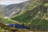 IRELAND - CO.WICKLOW - GLENDALOUGH - VIEW OVER THE UPPER LAKE FROM THE SPINK TRAIL