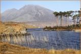 IRELAND- CO.GALWAY - CONNEMARA - DERRYCLARE LOUGH