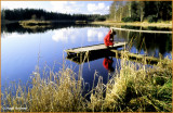 IRELAND - MONAGHAN - ROSSMORE FOREST PARK - PRIESTFIELD LAKE
