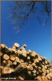 IRELAND - MONAGHAN - ROSSMORE FOREST PARK