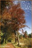 IRELAND - MONAGHAN ROSSMORE FOREST PARK