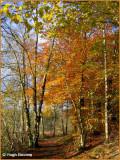 IRELAND - MONAGHAN - ROSSMORE FOREST PARK - PRIESTFIELD LAKE WALK