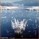 IRELAND - MONAGHAN - ROSSMORE FOREST PARK - BARN HILL LAKE