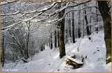 IRELAND - MONAGHAN - ROSSMORE FOREST PARK - PRIESTFIELD WALK