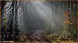 RELAND - CO. MONAGHAN - ROSSMORE FOREST PARK