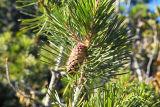 IMG05744.jpg pinecone & spiderweb