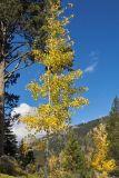 IMG05659.jpg trees Resort at Squaw Creek