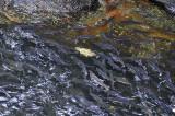 A Very Full Creek