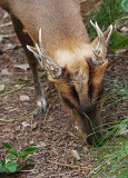 Close Up of Antlers