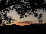 Sunset and Branches