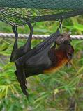 Bat N Banana