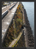 River Rhine Shoreline