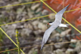 Flight Over Nesting Site