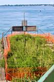 Tern Nesting Site