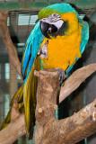 Friendly Parrot