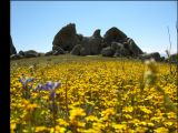 eagle rock thru flowers.jpg