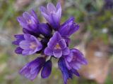 purple desert2.jpg
