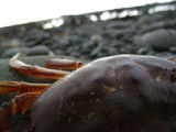 crabs eye view.jpg