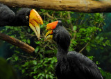 At the National Aviary