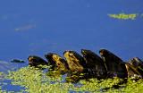 Audubon Swamp Garden - Charleston, South Carolina