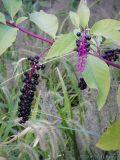 2006-09-29 Berries