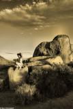 IMG_6079 (Desert Girl)