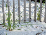 Fence and Beach Grass #2