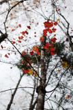 20091017-_MG_3774.jpg