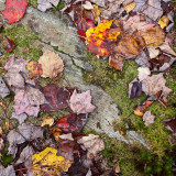 Leaves, Rock and Moss