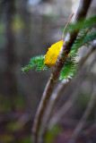 Yellow Leaf Resting on Branch