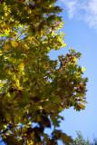20091017-_MG_3858-2.jpg