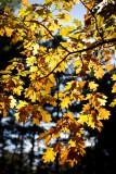 20091017-_MG_3864-2.jpg