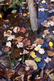 Leaves Fallen in Water, Small Tree Base