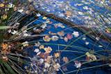 Fallen Leaves on Water #4