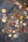 Fallen Leaves on Boardwalk #2