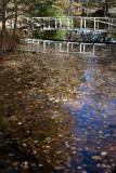 Birdsacre Pond Bridge #1