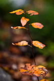 Last Leaf Tower