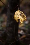 Eaten Last Leaf