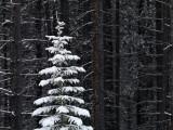 Jasper Winter